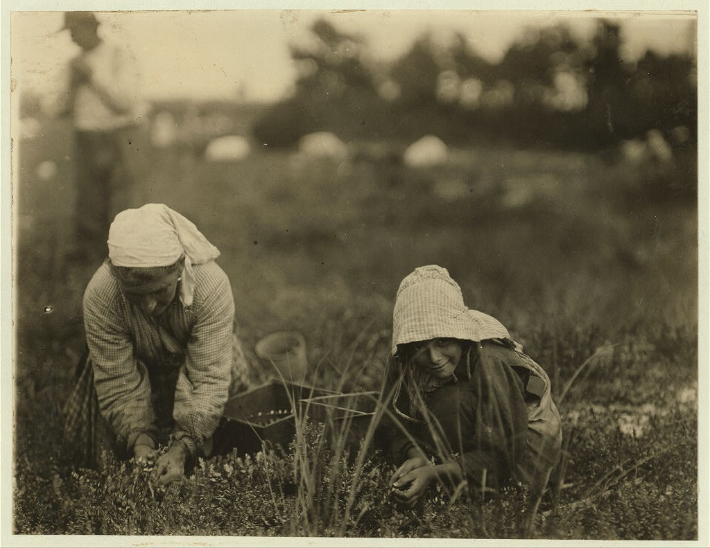 Lewis Hine - Millie Cornaro, 10yo, picking cranberries, White's Bog, Browns Mills, NJ (Sep. 28, 1910)