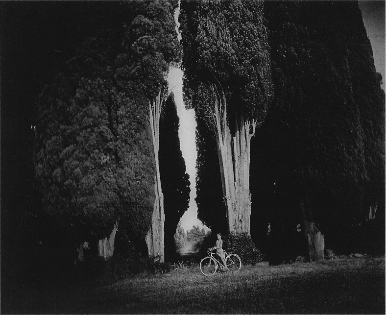 "Sally Mann - Sempervirens ""Stricta"" (1995)"