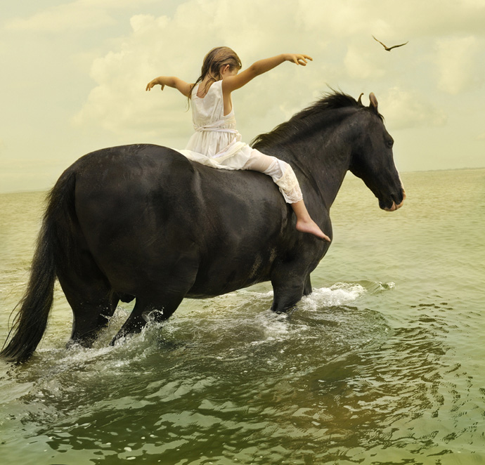 Tom Chambers - Marwari Stallion #1 (2009)