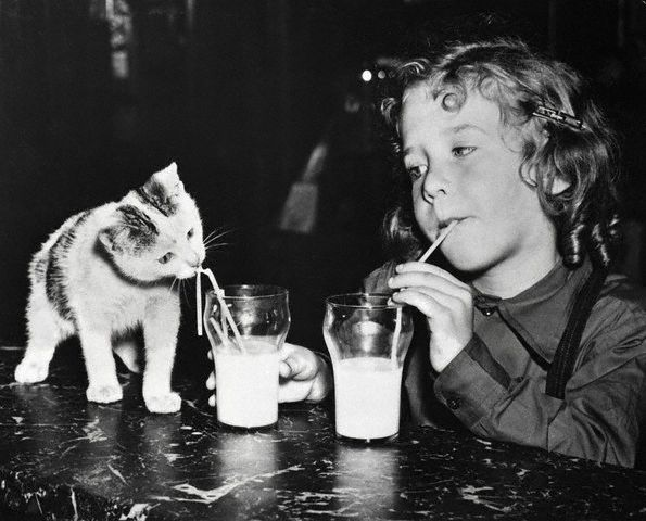 Bettmann - Girl And Kitten Drinking Milk (1949)