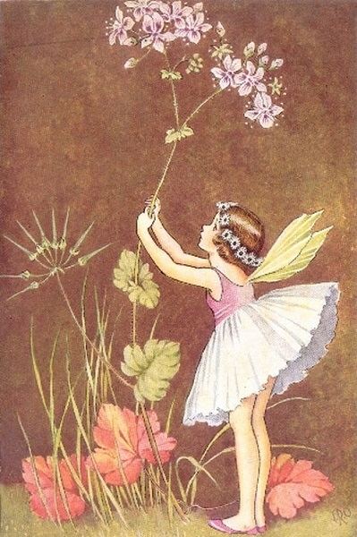 Ida Rentoul Outhwaite - Wild Geranium from the book A Bunch of Wild Flowers (1933)