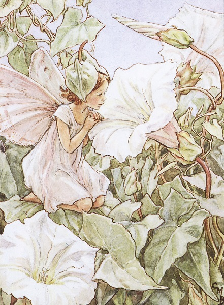 Cicely Mary Barker - Flower Fairies of the Wayside (1948)